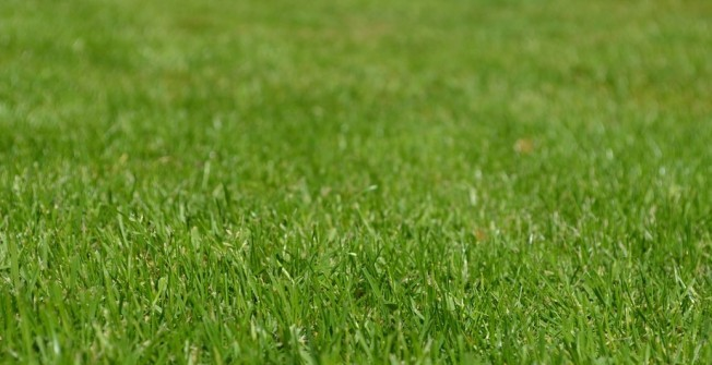 Lawn Suppliers in All Stretton